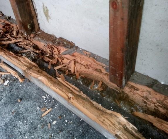 Termites in Homes